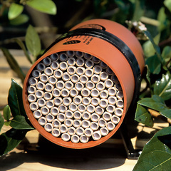 Photo of a Solitary bee nesting cylinder